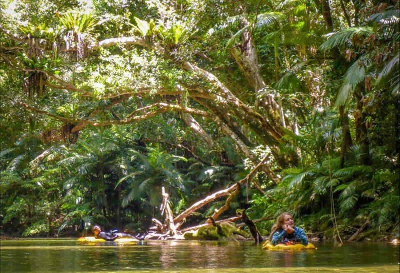 Rainforest Snorkelling