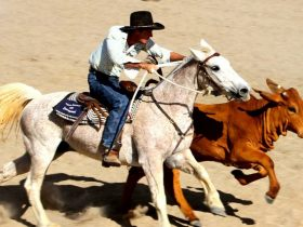 Bedourie Campdraft, Rodeo, Gymkhana and Bronco Branding