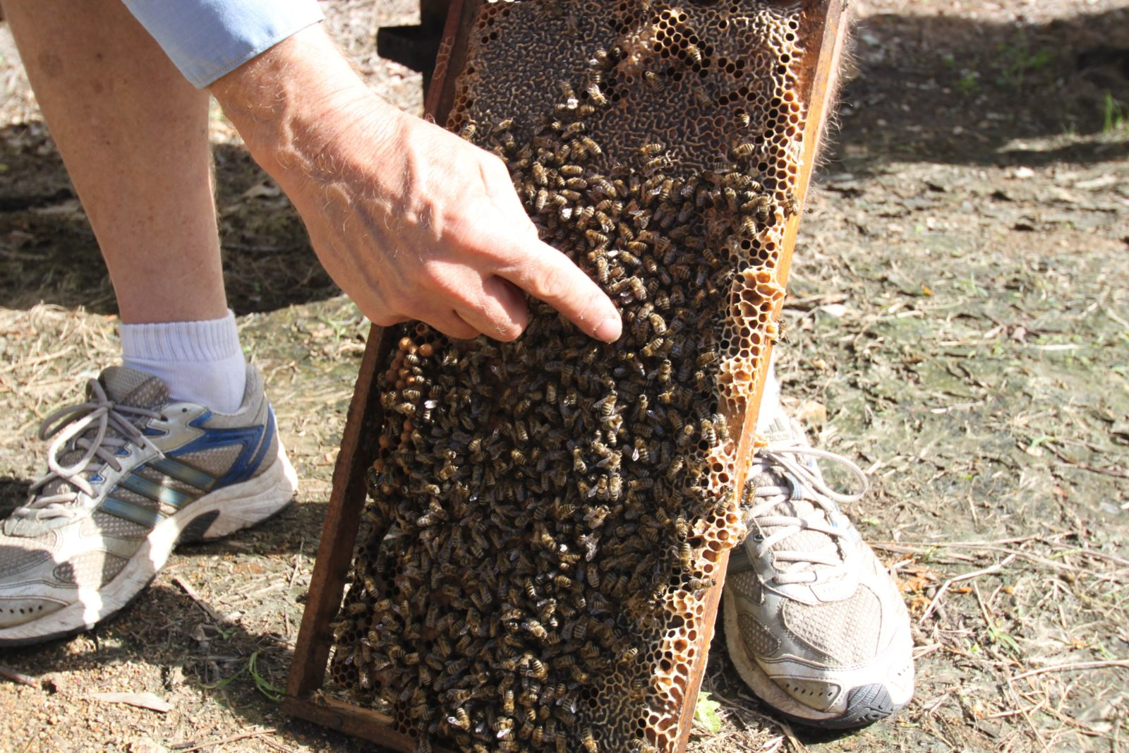 Bees on Keswick Island
