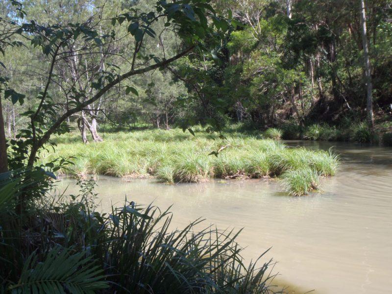 Creek at Bellthore National Park