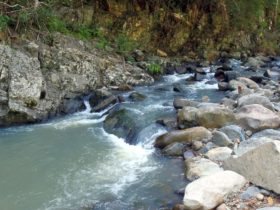 Stony Creek, Bellthorpe National Park