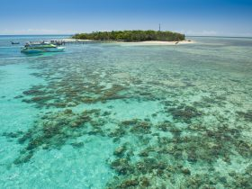 Green Island Great Barrier Reef Tours