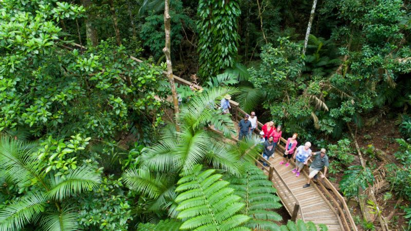 Guided Boardwalk in the Daintree