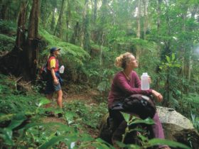 Two bushwalkers in raiforest, Binna Burra section