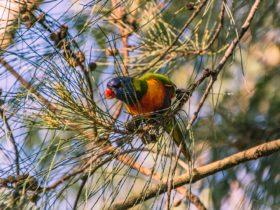 Birdlife at Dingo Park