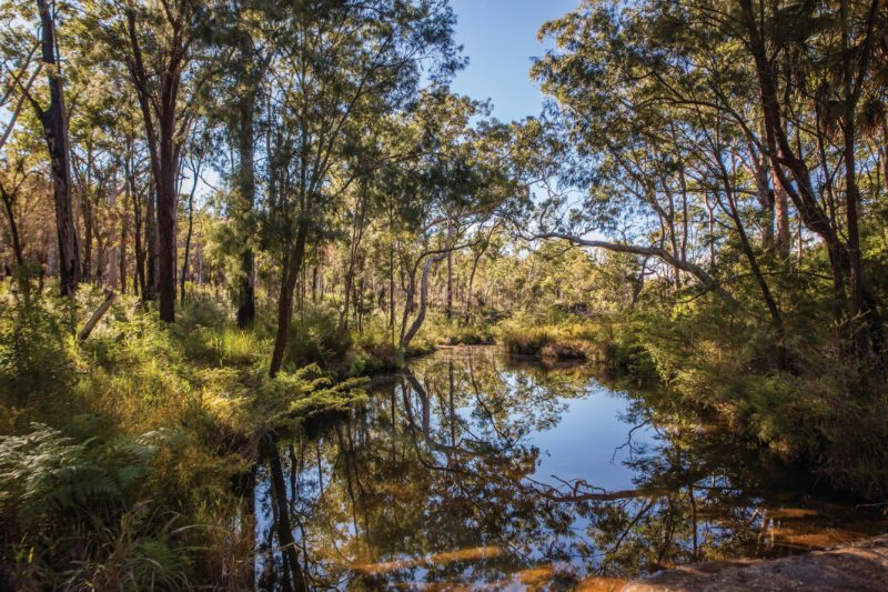 Quiet pool in creek fringed by open forest, Blackdown Tableland