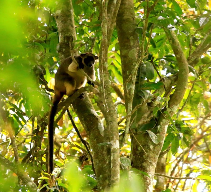 tree kangaroo wildlife tour