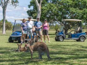 Kangaroos wildlife tour port douglas
