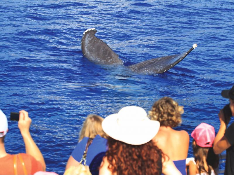 whale watching with boat club