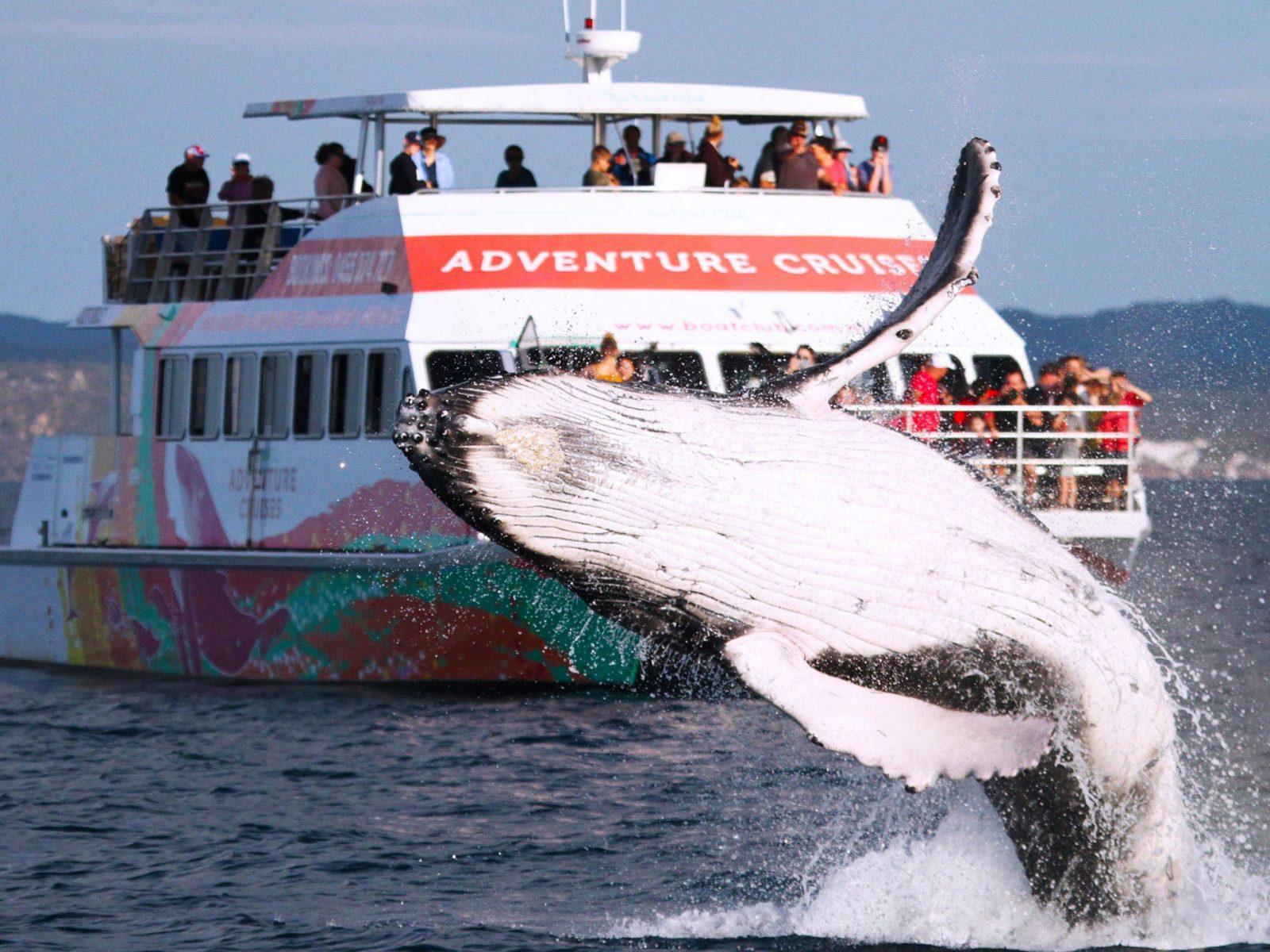amaroo and whale