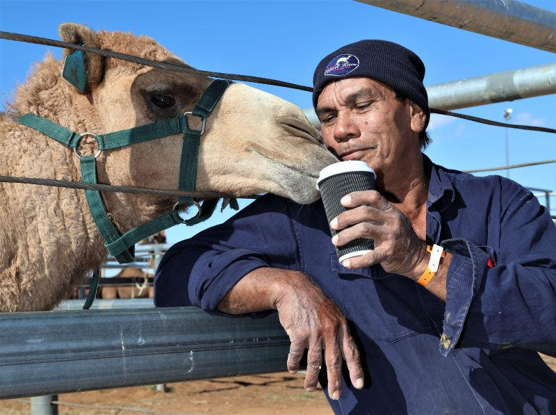 Local poddy camel 'Charlie' was bottle-fed and now loves coffee!