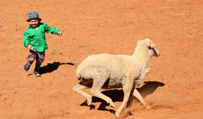 Sheep Tagging Competition for the kids