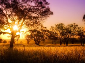 Sunset, Darling Downs