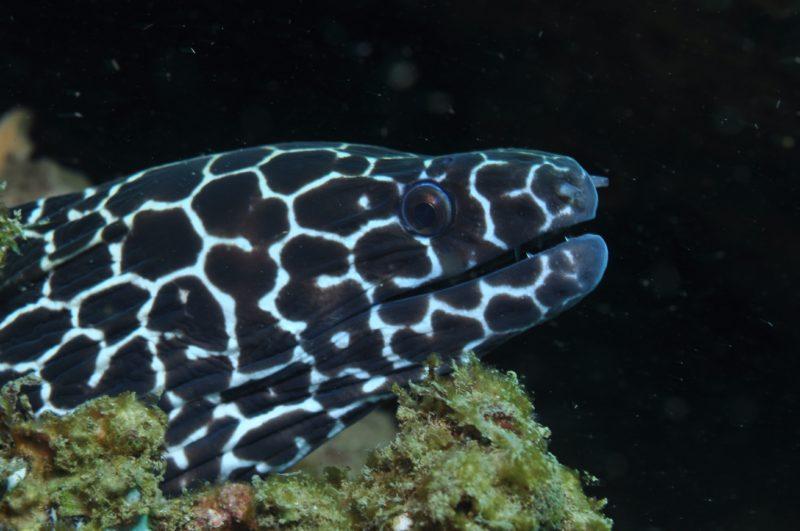 Burkitts Reef