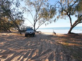 Car parked under shade of coastal trees at back of sandy beach.
