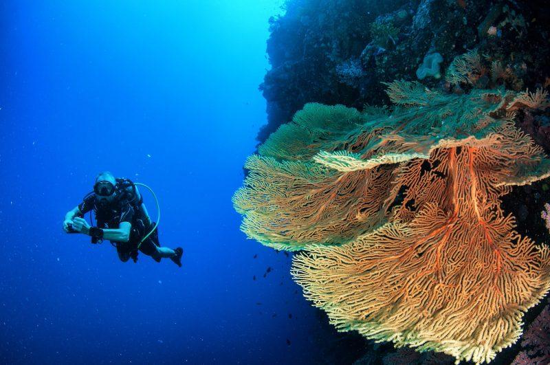 Scuba Diver & Yellow Seafan