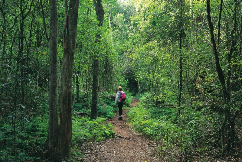 Person walking in forest, Cania Gorge National Park