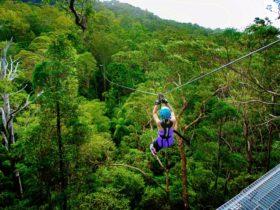 Seven huge ziplines spanning 1.4 kilometres