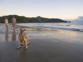 People and wallabies on beach