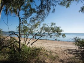 beachside camping, Cape Hillsborough National Park