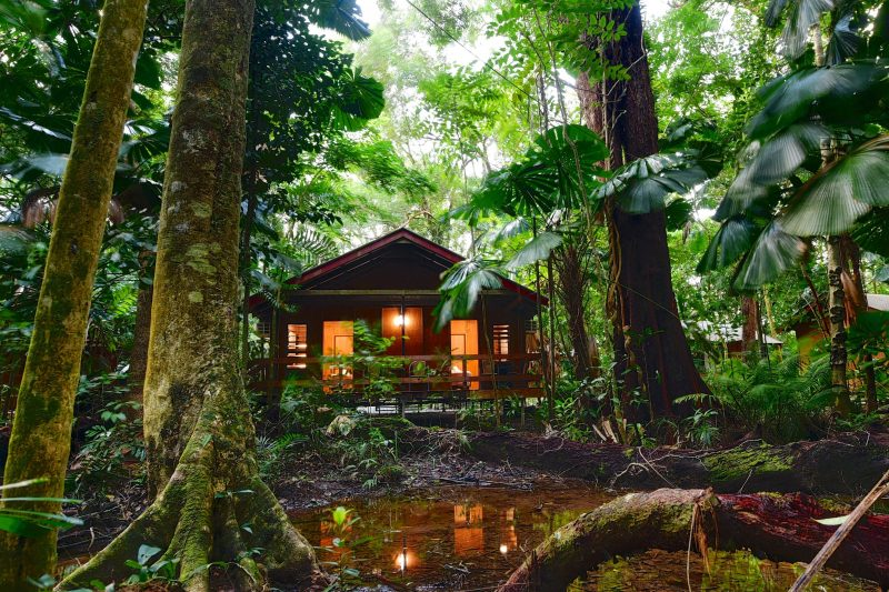 Mackay Cabin nestled in the rainforest.