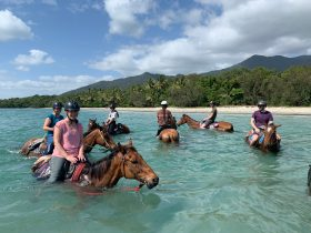 If ocean clarity is favourable riders are able to take their horses into the ocean.