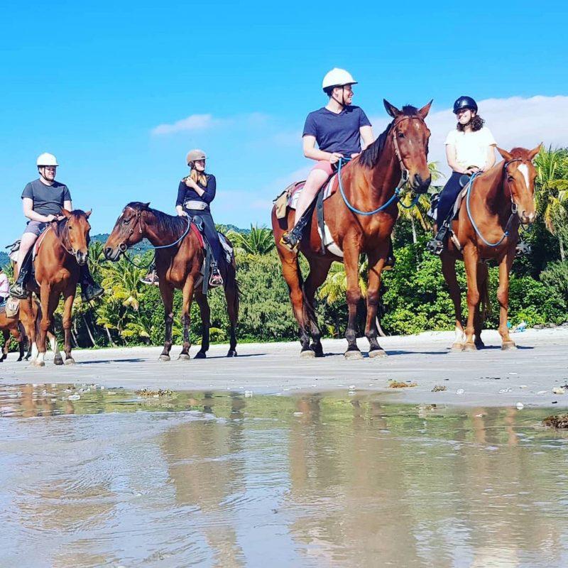 Cape Trib Horse Rides Beach Horse Ride Tour