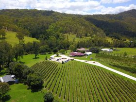 O'Reilly's Canungra Valley Vineyards