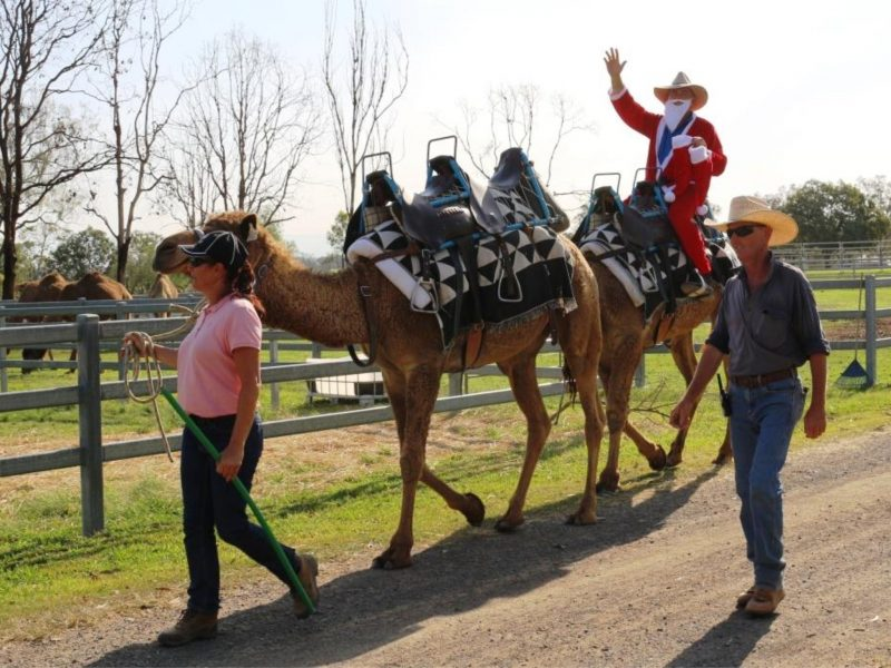 Summer Land Camels Christmas Markets
