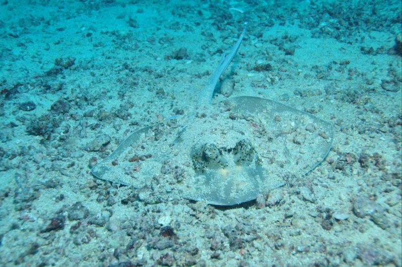 Cobia Hole Dive Site