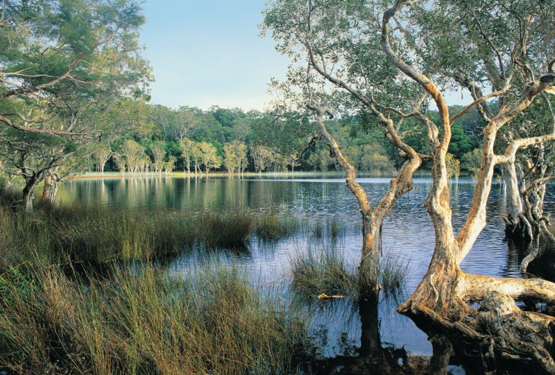 Upper Noosa RIver, and surrounding woodland, Cooloola.
