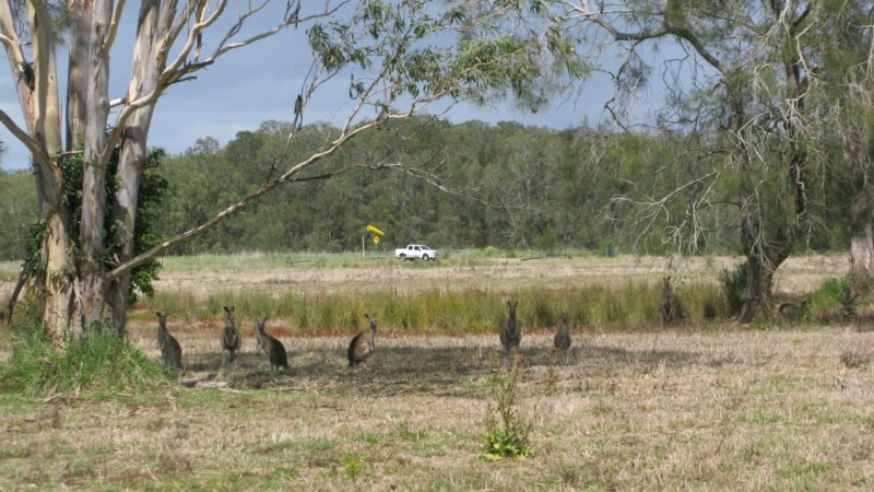 Coombabah Lakes Conservation Area