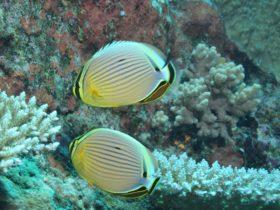 Coral Gardens Dive Site