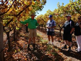 Cotton Farm and Vineyard Tour