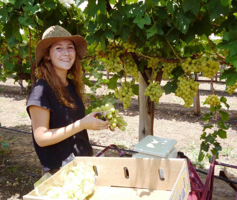 Cotton Farm and Vineyard Tour