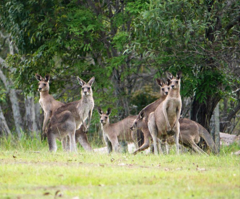 Brisbane Wildlife