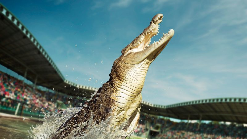 Crocs on Tours
