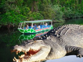 Cruising along Daintree River, crocodiles, birdlife, reptiles, butterflies