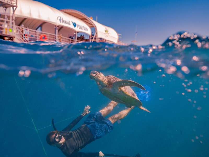 Snorkelling at Hardy Reef
