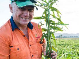 Shane Templeton in the ginger fields