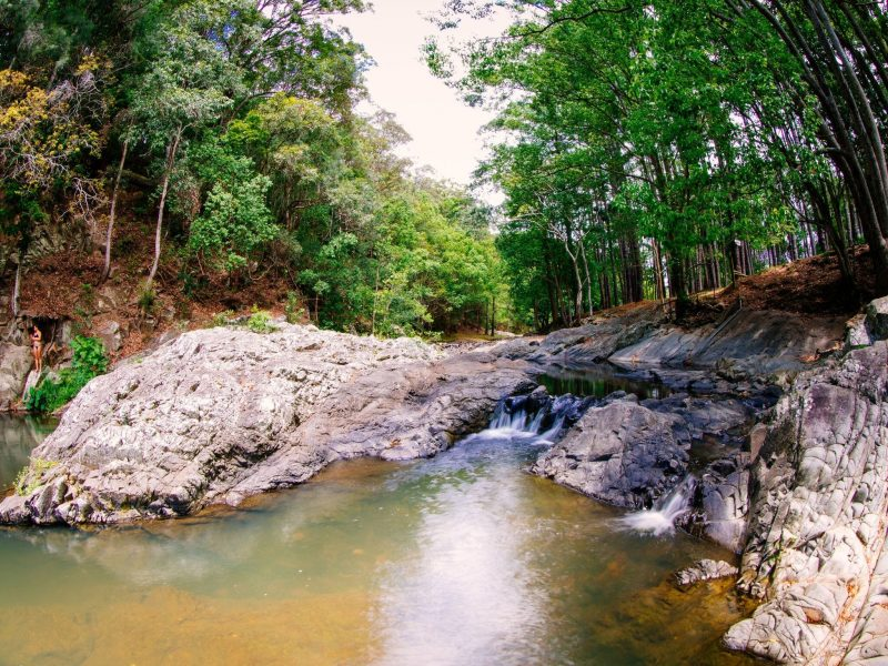 Currumbin Rock Pools including greenery