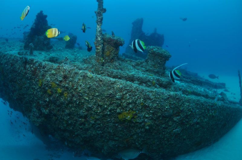 Curtain Artificial Reef