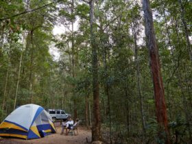 Tent in forest, Mount Mee