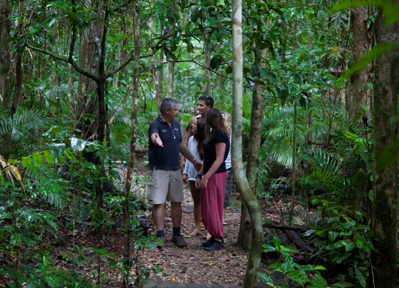 Personalised guided walks through the rainforest