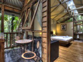Daintree Wilderness Lodge