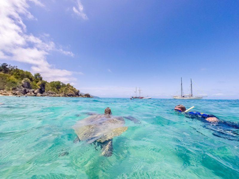reef turtles whitsundays