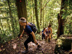 Hiking Daintree