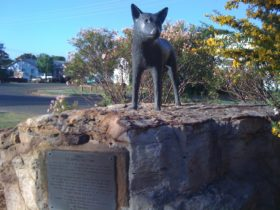 Dingo Queensland