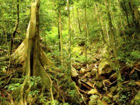 Wet Tropic Rainforest