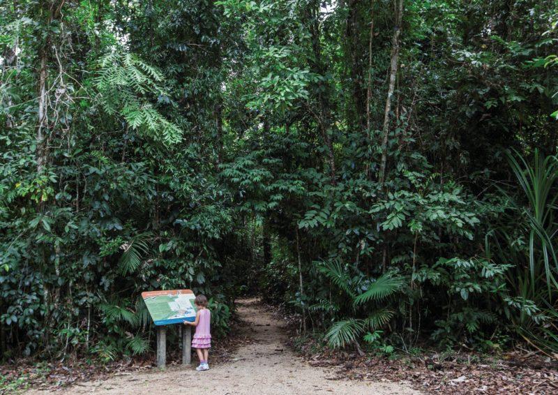 Walking track through rainforest.